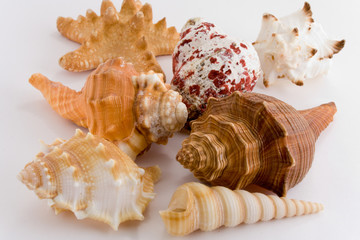 collection of cockle-shell isolated on white
