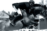 equestrian jumping & action (black & white) poster