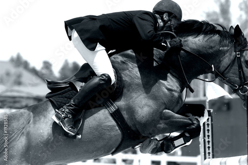 equestrian jumping & action (black & white)