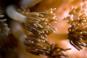 anemone abstract indonesia sulawesi