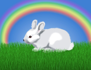 rabbit & rainbow