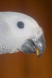 the beak poster