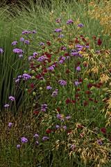 prairy garden
