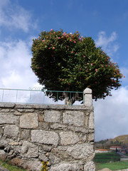 tree and stone wall
