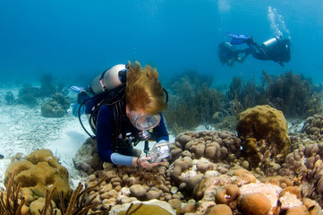 woman diver photographing the reef