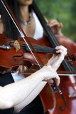 Fototapety violin player playing music for a wedding or event