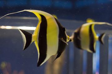 aquarium fish 6