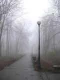 park lane in the fog poster