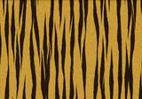 tiger fell fur