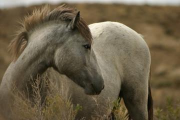 wild colt posing