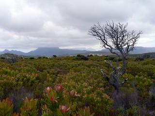 grey winter landscape