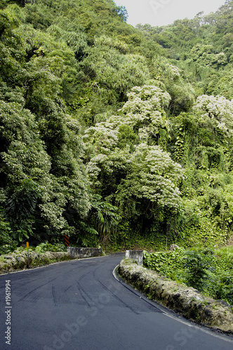 tropical highway