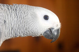 horizontal parrot poster