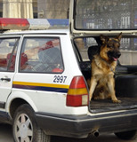 police vehicle and police dog poster