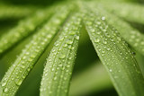 droplets on leafs poster