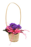 decorative basket full of violets poster