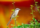 43-bird on the bush poster