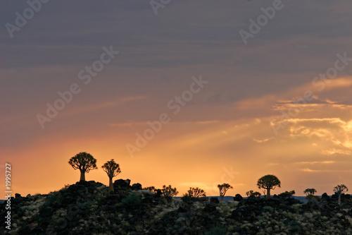 Leinwanddruck Bild quiver tree silhouettes