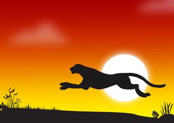 cheetah - africa