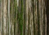 old tree trunk vertically poster