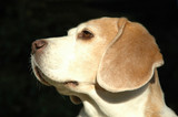 dog in profile poster