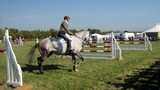 showjumping competor warming up before competing poster