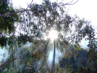 niebla otoñales 2