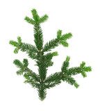 perfecty isolated spruce twig poster