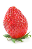 fresh delicious strawberry standing on its stalk poster