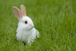 white rabbit on the grass - 2027587