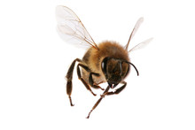 "Постер, картина, фотообои ""flying bee"""