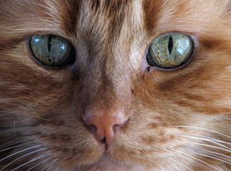 orange cat macro