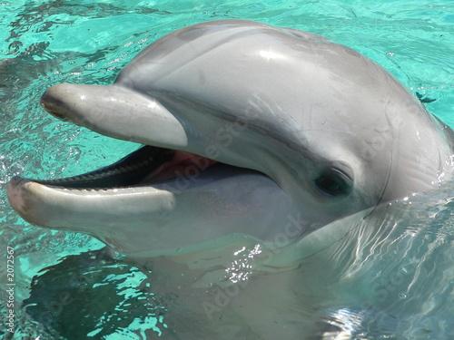 Fotobehang Dolfijn bottlenose dolphin