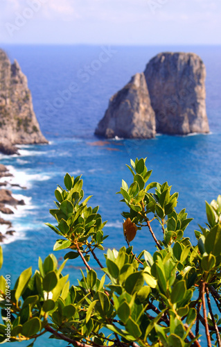 capri island view from plant