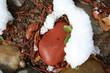 stock image of rocks under snow