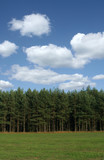 tree line with cumulus clouds poster