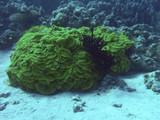 stone corals poster