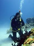 diver beside black coral tree poster