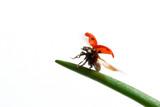ladybird flight poster