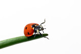 ladybug run poster