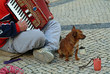 beggar producing music in street