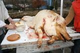 pig. after slaughter. poster