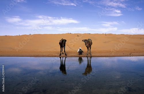 Deurstickers Algerije chamelier et dromadaires au bord de l'eau