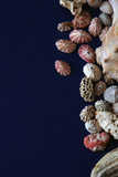 assorted shells on edge of page poster