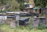 Informal settlement near Knysna, Western Cape poster