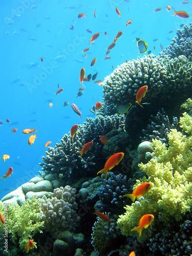 Tuinposter Koraalriffen reef 99