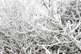 arbre gelé poster