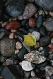 rock, stone color leaf texture wild lake superior poster