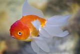 fish in a fresh-water aquarium. poster