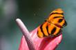 Leinwanddruck Bild butterfly